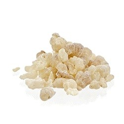 Frankincense Resin Young Living Essential Oil